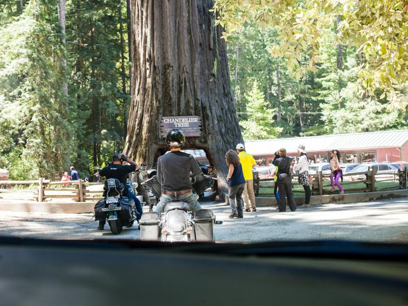 redwoods-7453